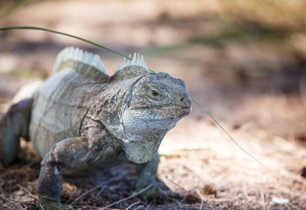 Providenciales Island Wildlife