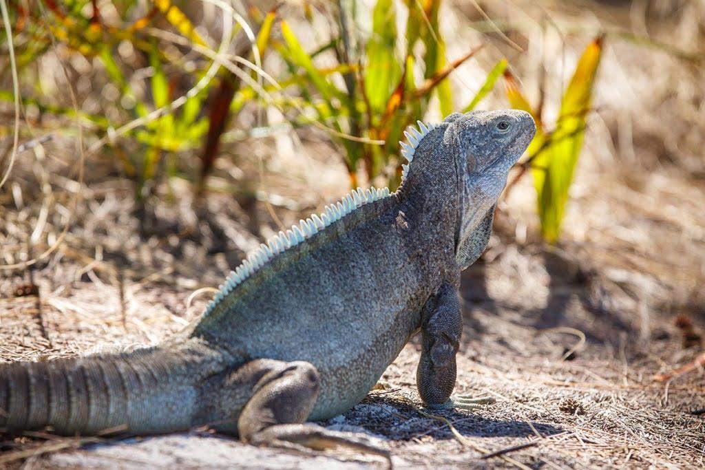 Turks and Caicos Wildlife